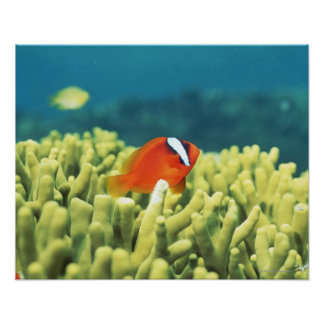 Coral reef teeming with tropical fish poster