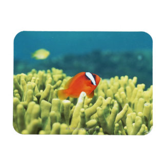 Coral reef teeming with tropical fish rectangular photo magnet