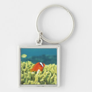 Coral reef teeming with tropical fish Silver-Colored square key ring