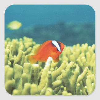 Coral reef teeming with tropical fish square sticker