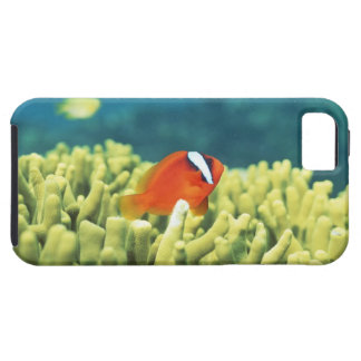 Coral reef teeming with tropical fish tough iPhone 5 case