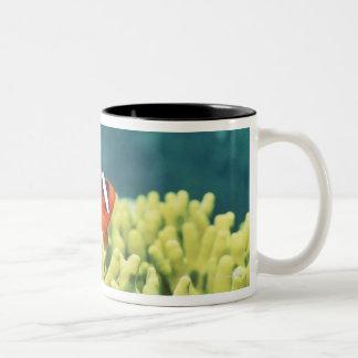 Coral reef teeming with tropical fish Two-Tone coffee mug