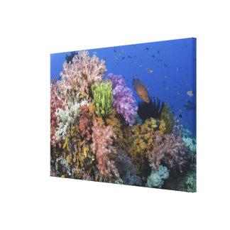 Coral reef, uderwater view canvas print