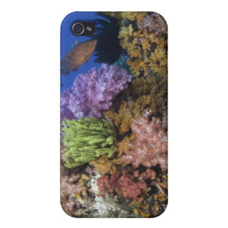 Coral reef, uderwater view iPhone 4 cases