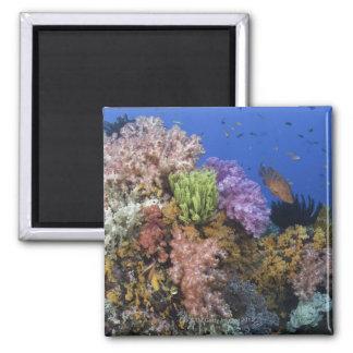 Coral reef, uderwater view magnet