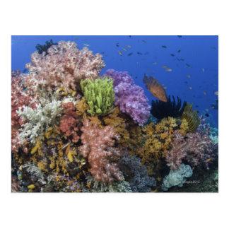 Coral reef, uderwater view postcard