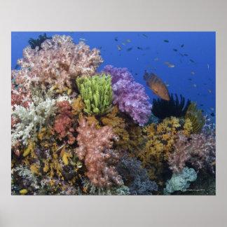 Coral reef, uderwater view poster