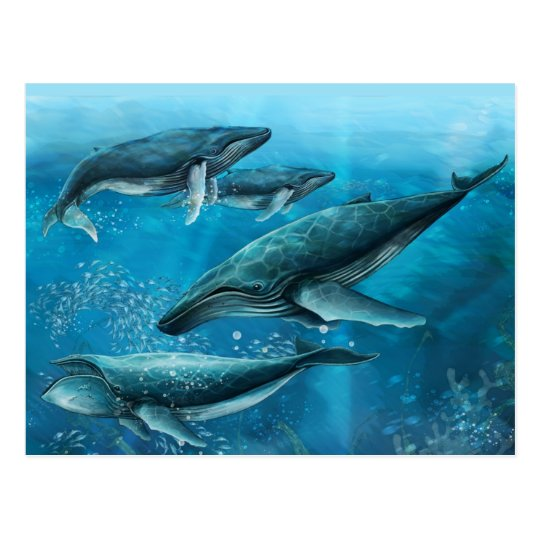 Coral Reef Whales Postcard