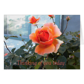 Coral Rose Card, Thinking of you today. Greeting Card