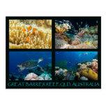 Coral Sea Postcard