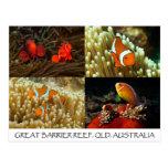 Coral Sea Postcard - Clownfish