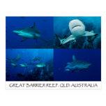 Coral Sea Postcard - Reef Sharks