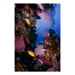 Coral Sea - Tropical Fish & Reef - Poster