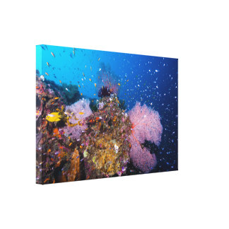 Coral Sea - Tropical Fish & Reef - Wrapped Canvas Stretched Canvas Print