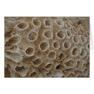Coral Texture Card
