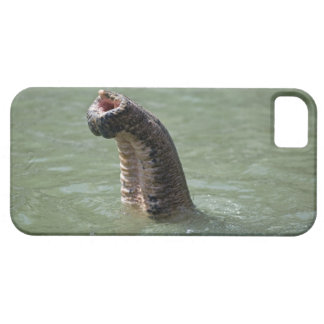 Corbett National Park, Uttaranchal, India Barely There iPhone 5 Case