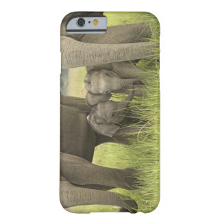 Corbett National Park, Uttaranchal, India. Barely There iPhone 6 Case