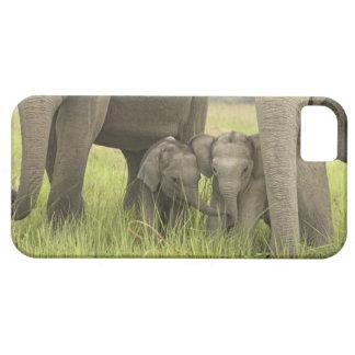 Corbett National Park, Uttaranchal, India. iPhone 5 Cases