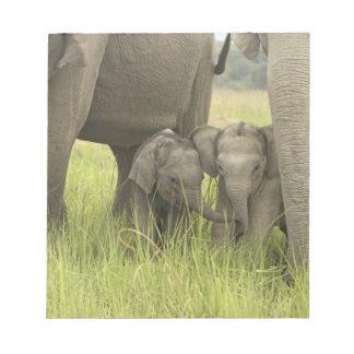 Corbett National Park, Uttaranchal, India. Notepad