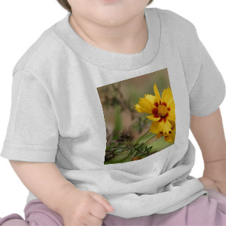Coreopsis Photos Baby T-Shirt