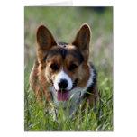 Corgi Dog Card