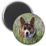 Corgi Dog Refrigerator Magnet