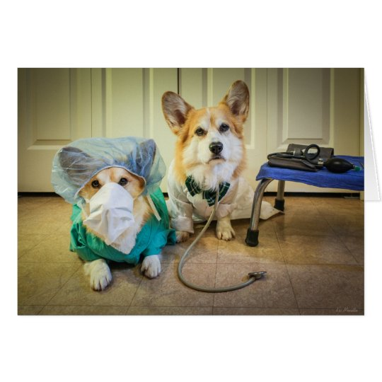Corgi Dr and nurse Surgery is Over. Fast