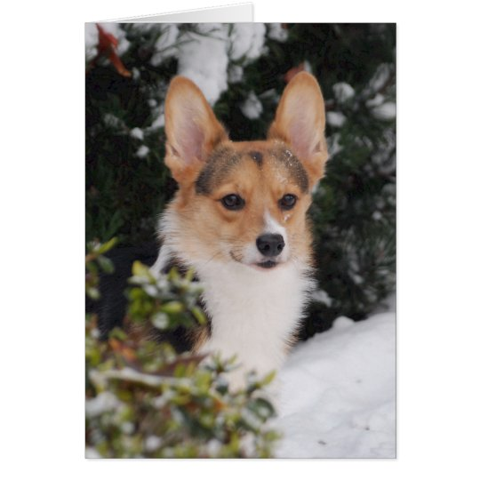 Corgi in the Snow Card