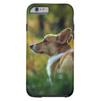 Corgi iPhone 6 case