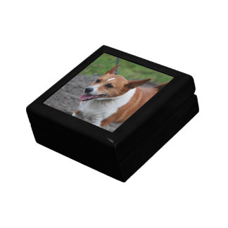 Corgi Jewelry Box