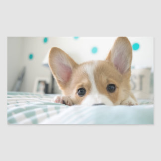 corgi puppy sticker