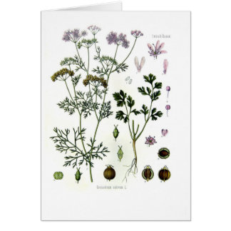 Coriander Greeting Card