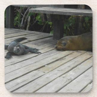 CORK COASTER Sea Lion/Iguana Galapagos Islands