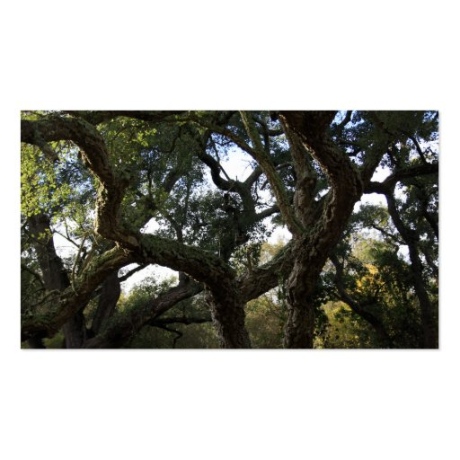 Cork oak or tree of the cork, elegant tree business cards