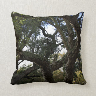 Cork oak or tree of the cork, elegant tree cushion