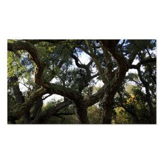 Cork oak or tree of the cork, elegant tree pack of standard business cards