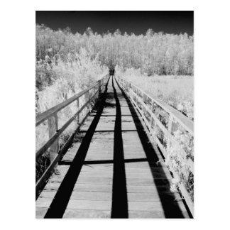 Corkscrew Swamp Sanctuary boardwalk, Florida, Postcard