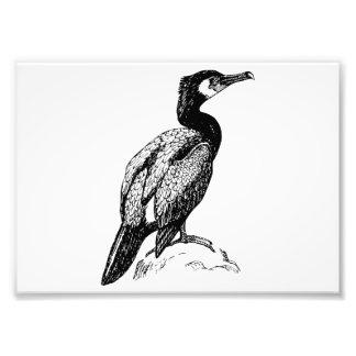 Cormorant Bird Art Photo