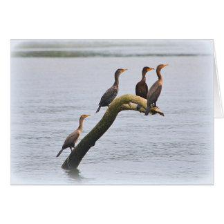 Cormorant Notecard