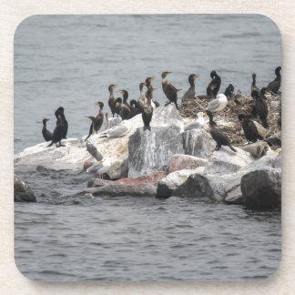 cormorant on river coaster