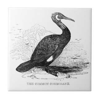 Cormorant Vintage Bird Wildlife Drawing Tile
