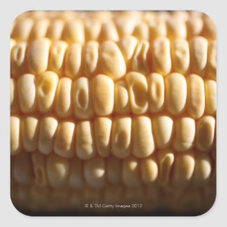 Corn close-up square sticker