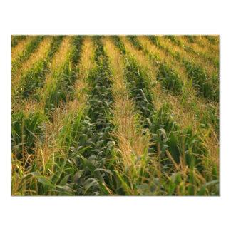 Corn field 11 cm x 14 cm invitation card