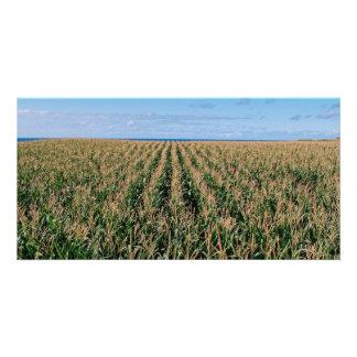 Corn field customized photo card