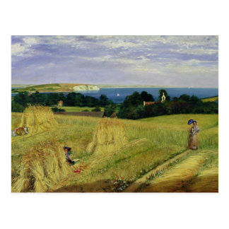 Corn Field in the Isle of Wight Postcards