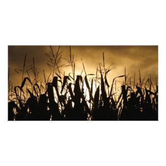 Corn field Silhouettes Photo Card