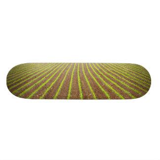 Corn field 21.6 cm old school skateboard deck