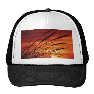 Corn Hats