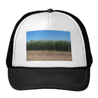 corn maze mesh hats