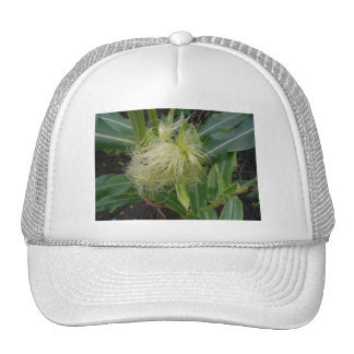 Corn on the Cob Cap